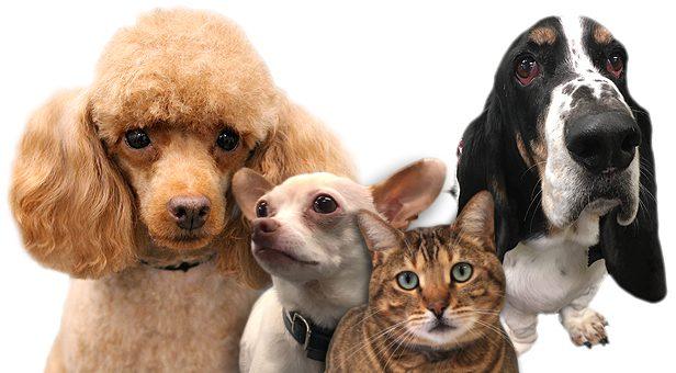 Tega Cay, SC Pet Grooming | Pet Supplies | Pet Foods | 803-548-1301